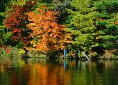 stock photo of crotons  - inlet of the resevoir of croton-hardy hydro-electric dam north of newaygo michigan  - JPG