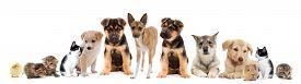 stock photo of laika  - a set pets on a white background - JPG