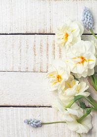 pic of daffodils  - Fresh spring white daffodils and blue muscaries on white painted wooden background. Selective focus. Place for text. Toned image. ** Note: Soft Focus at 100%, best at smaller sizes - JPG