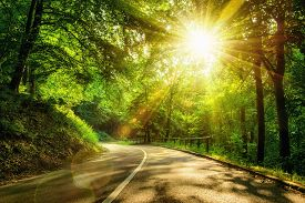 stock photo of illuminated  - Landscape shot with the gold sun rays illumining a scenic road in a beautiful green forest with light effects and shadows - JPG