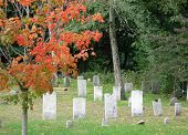 picture of 1700s  - old cemetery with tree in autumn - JPG