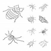 Vector Illustration Of Fauna And Entomology Icon. Set Of Fauna And Animal Stock Symbol For Web. poster
