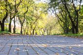 Park Walkway With Yellow Dry Fallen Leaves. Macro Shot. Blurred Park Trees Background poster
