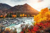 Katun River With Yellow Autumn Trees In Altai Mountains At Sunset. Altai Republic, Siberia, Russia poster