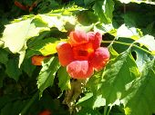 Red Fleshy Flowers Growing On A Tree In The Wild poster