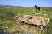 image of ox wagon  - Romanain carriage with horse - JPG