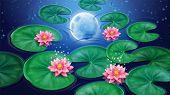 Water With Lotus Flower And Moon Reflection. Pink Floral Blossom With Stars Background. Decoration E poster