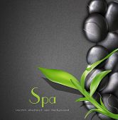 vector background of a spa with stones, and a sprig of green bamboo