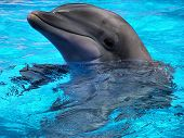 image of porpoise  - Dolphins are marine mammals that - JPG
