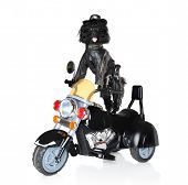 picture of bull-riding  - Poodle in leather jacket riding on a black police motorcycle - JPG