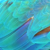picture of harlequin  - Colorful feathers Harlequin Macaw feathers background texture - JPG