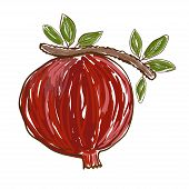stock photo of freehand drawing  - Pomegranate is freehand drawing - JPG