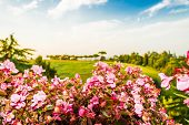 image of begonias  - begonias Flowers green weeds leaves plants and trees on vineyards backgrounds on cultivated hills in Italian countryside the small village of Dozza near Bologna in Emilia Romagna - JPG