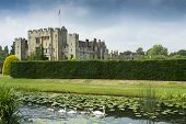 image of hever  - Swans swimming in the grounds of the famous Hever castle in Kent - JPG
