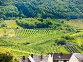 stock photo of moselle  - vineyard on green hills in Moselle region Germany