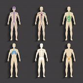 stock photo of internal organs  - Set of human organs and systems of the body vitality - JPG