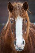 image of brown horse  - Portrait of brown horse - JPG