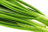 image of bine  - Young onion on white background - JPG