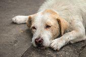 image of homeless  - Homeless dog hope and sleep on the side street - JPG