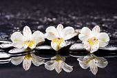 picture of stone-therapy  - Still life with three white orchid with therapy stones  - JPG