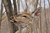 foto of deer head  - portrait of deer deer female in park in winter deer in the forest - JPG