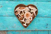 image of edible mushrooms  - edible mushrooms fungi  - JPG