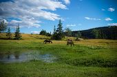 picture of wrangler  - horses hanging out in the pasture waiting for the next ride - JPG