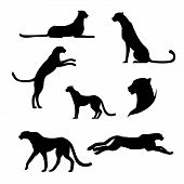 image of cheetah  - Cheetah set of black silhouettes - JPG