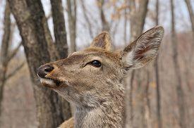 stock photo of deer  - portrait of deer deer female in park in winter deer in the forest - JPG