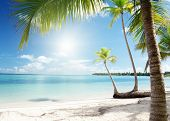 Постер, плакат: Карибское море и кокосовой пальмы
