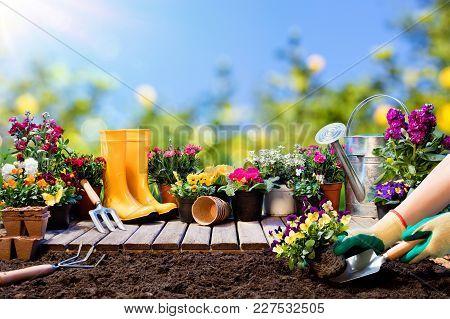 Gardening Gardener Planting Pansy With