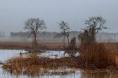 Foggy Landscape In The Greenwood, Hornbeam Trees, Rainy Autumn Wether, Gloomy Mood Autumn Mist Fog R poster