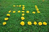 stock photo of swastika  - Fresh yellow flowers arranged to form the swastika symbol commonly used in religions such as Hinduism and Buddhism - JPG