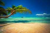 Palmtree And Tropical Beach. Exotic Island Saona In Caribbean Sea, Dominican Republic poster