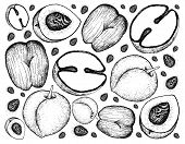 Tropical Fruits, Illustration Wall-paper Background Of Hand Drawn Sketch Peach, Nectarine Or Runus P poster