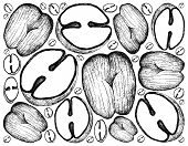 Tropical Fruits, Illustration Wall-paper Background Of Hand Drawn Sketch Coco De Mer Or Double Cocon poster