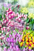 Beautiful Multicolored Flower Bouquets. Various Fresh Tulips At Flower Shop. Wholesale Or Retail Flo poster