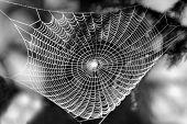 stock photo of spider web  - spider web - JPG