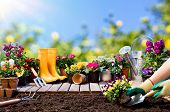 Gardening - Gardener Planting Pansy With With Flowerpots And Tools poster