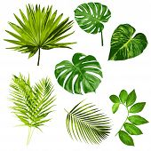 Tropical Leaves Vector Herbal Clipart Digital Art Set Of 7 Imagestropical Leaves Vector Herbal Clipa poster