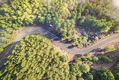 Aerial View Of Road Inside Forest With Trees On Teide Natural Park In Tenerife - Wander Travel And N poster