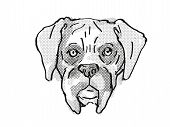 Retro Cartoon Style Drawing Of Head Of A Boxer Dog , A Domestic Dog Or Canine Breed On Isolated Whit poster