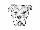 Retro Cartoon Style Drawing Of Head Of A Bullboxer Pit Also Sometimes Called The Pixoter Or American poster