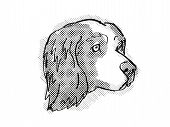 Retro Cartoon Style Drawing Of Head Of A Clumber Spaniel, A Domestic Dog Or Canine Breed On Isolated poster