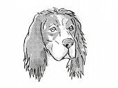 Retro Cartoon Style Drawing Of Head Of An English Setter, A Domestic Dog Or Canine Breed On Isolated poster