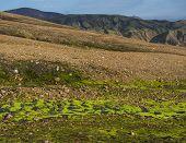 Lush Vivid Green Wet Moss With Colorful Rhyolit Landmannalaugar Mountain At Fjallabak Nature Reserve poster