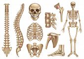 Human Skeleton Structure. Skull, Spine, Rib Cage, Pelvis, Joints. Anatomy And Medicine, 3d Vector Ic poster