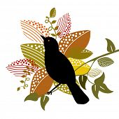 image of caw  - oriole bird with foliage - JPG