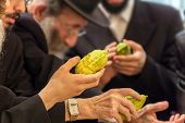Religious Jew with a gray beard and glasses chooses etrog for the holiday Sukkot. The annual pre-hol poster