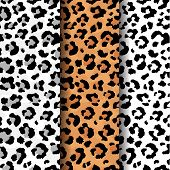 Vector Set Of Seamlevector Set Of Abstract Seamless Pattern Of Leopard Predatory Print. Modern Anima poster
